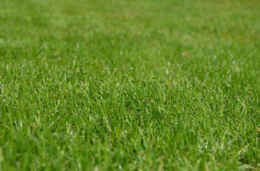 W jakim okresie można zakładać trawnik?