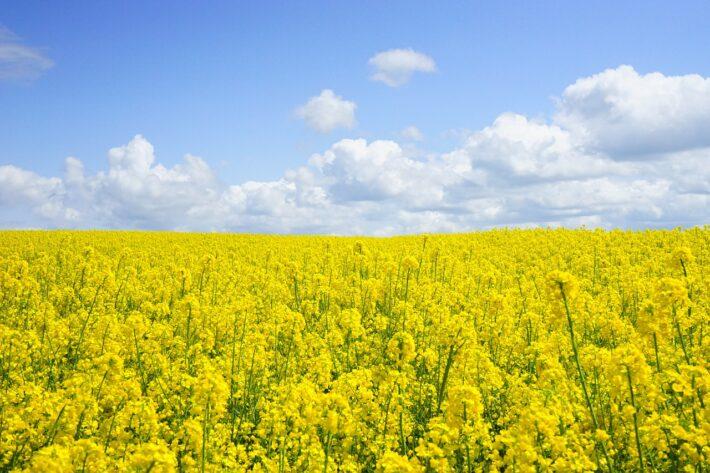 Czym jest ekologiczna produkcja roślin spożywczych?